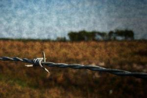 650_1000_barbed-wire