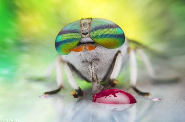 imagen-mundo-micro44